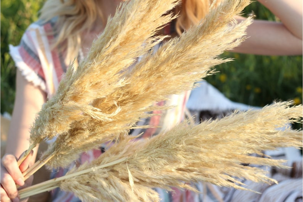 Пампасная трава (кортадерия) белая 12 колосков 83 см - Фото 6