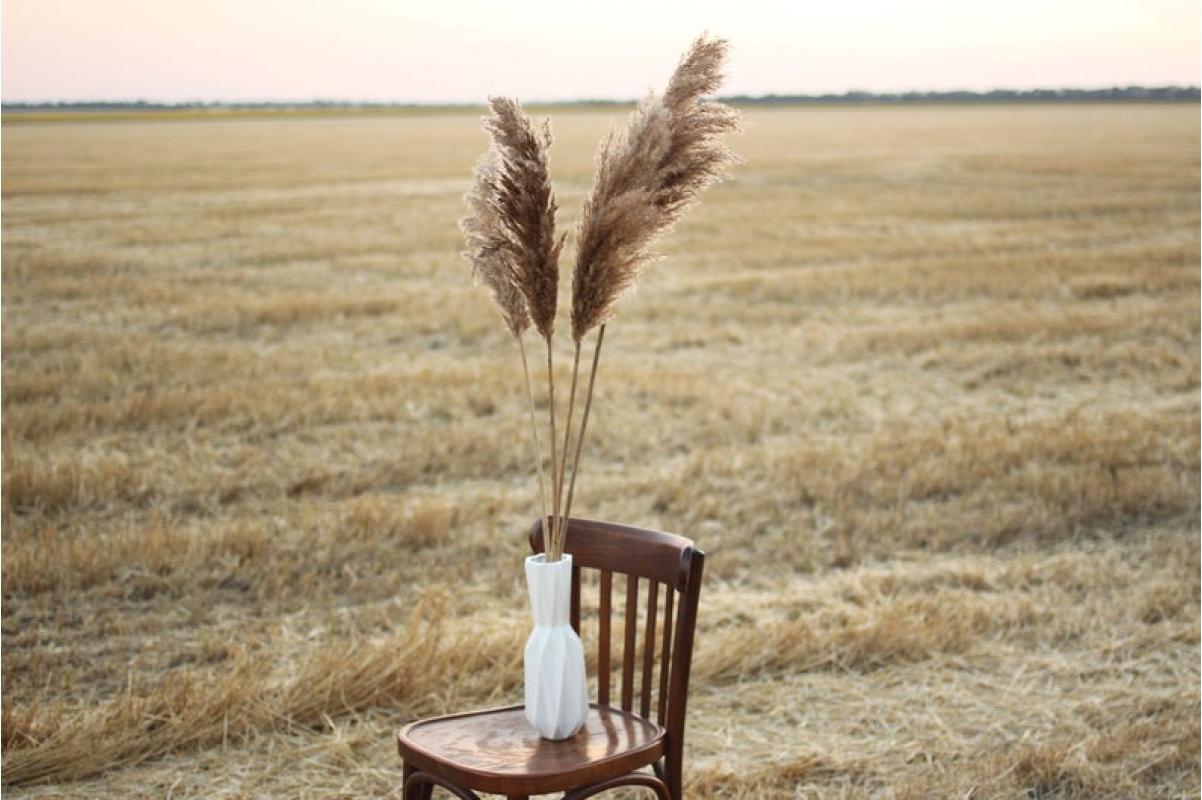 Сухоцвет - Пампасная трава (Кортадерия) коричневая 12 колосков 83 см - Фото 3
