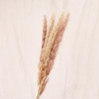 Сухоцвет - Пампасная трава (Кортадерия) коричневая 12 колосков 83 см
