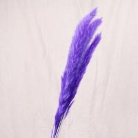 Сухоцвет - Пампасная трава (кортадерия) синяя 12 колосков 83 см
