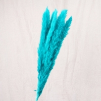 Сухоцвет - Пампасная трава (кортадерия) голубая 12 колосков 83 см