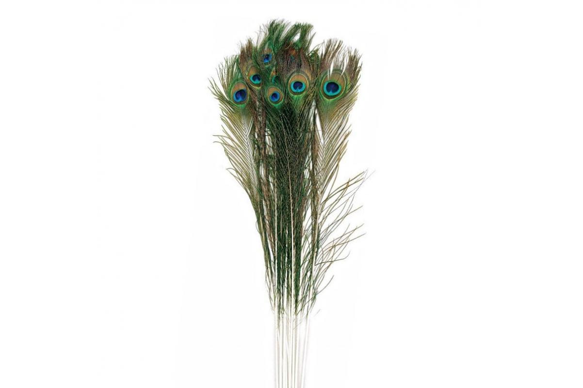 Павлинье перо натуральное 85 см