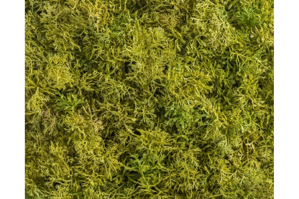 Мох Ягель искусственный светло-зеленый микс 25 x 50 см (коврик) - Фото 3