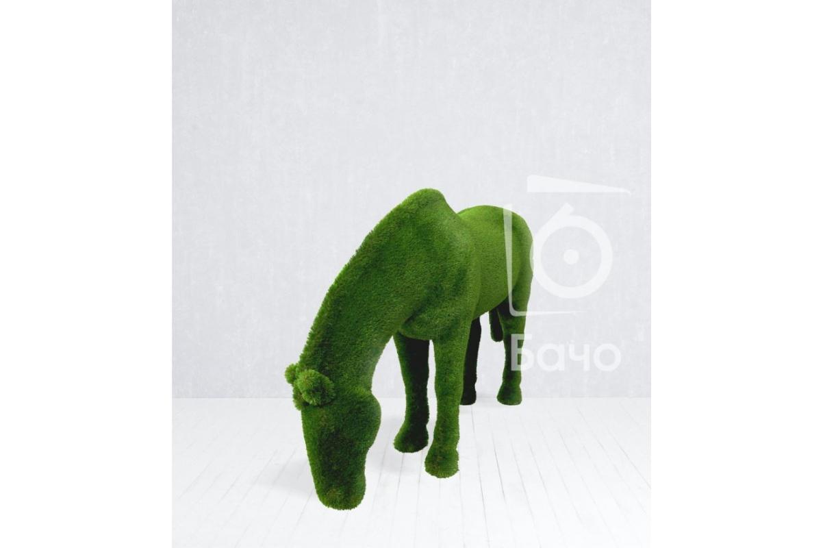 Топиари Лошадь на лугу - Фото 5