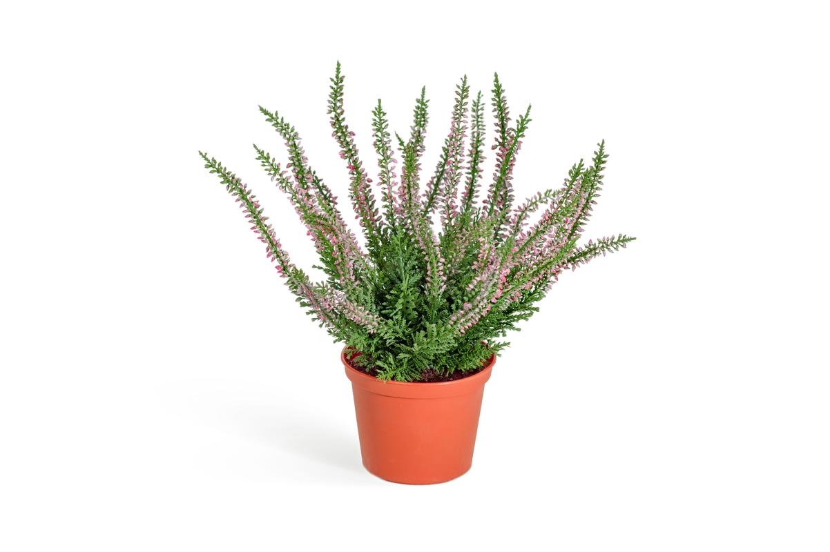 Эрика (Вереск) куст искусственный 27 см (3 цвета)