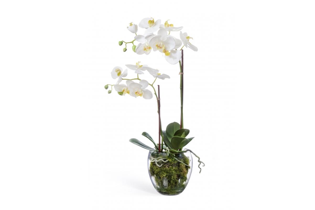 Орхидея Фаленопсис искусственная белая с мхом, корнями, землей 60 см (Real Touch)