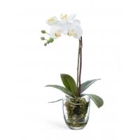 Композиция Орхидея Фаленопсис с мхом, корнями, землей искусственная белая 40 см (Real Touch)