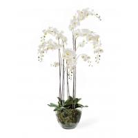 Композиция Орхидея Фаленопсис искусственная белая с мхом, корнями, землей 150 см