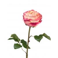 Роза Джема искусственная нежно-персиковая с малиновым 56 см