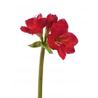 Амариллис искусственный темно-красный 77 см