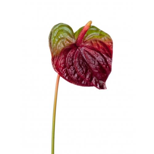Антуриум искусственный бордово-зеленый 72 см
