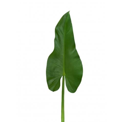 Лист Каллы искусственный зеленый 59 см