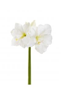 Амариллис PRINCESS искусственный белый 73 см