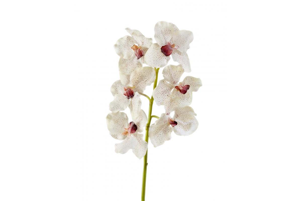 Орхидея Ванда искусственная крем с крапинами бордо 56 см (Real Touch)
