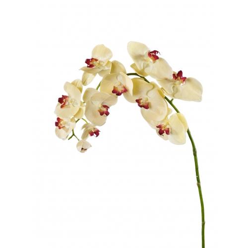 Орхидея Фаленопсис искусственная бледно-золотистая с бордо 100 см (Real Touch)