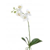 Орхидея Фаленопсис средняя искусственная белая куст с корнями 57 см (Real Touch)