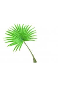 Лист искусственный пальмы Вашингтония веерный 50*70 см