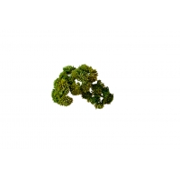 Суккулент Седум малый искусственный зеленый 21 см (Real Touch)