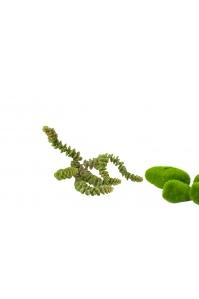 Суккулент искусственный зеленый 26 см (Real Touch)