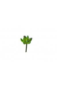 Суккулент Крестовник малый искусственный зеленый 13 см (Real Touch)