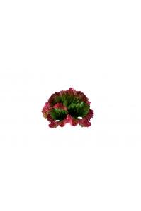 Суккулент Ракушка искусственный зелено-красный 17 см (Real Touch)