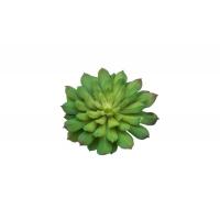 Суккулент Эониум Кастелло-Павэ искусственный зелено-красный 17 см (Real Touch)