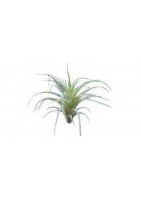 Тилландсия Оаксакана искусственная припыленно-зеленая 18 см