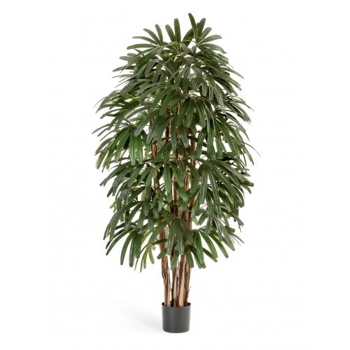 Рапис Пальма искусственная широколистная