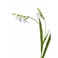 Фрезия искусственная белая 80 см