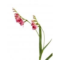 Фрезия искусственная темно-розовая 80 см