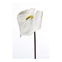 Антуриум искусственный белый 80 см (real touch)