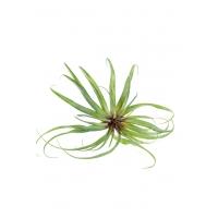 Тилландсия фиалкоцветковая искусственная зеленая 30 см