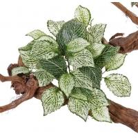 Фиттония искусственный куст зелено-белый 25 см