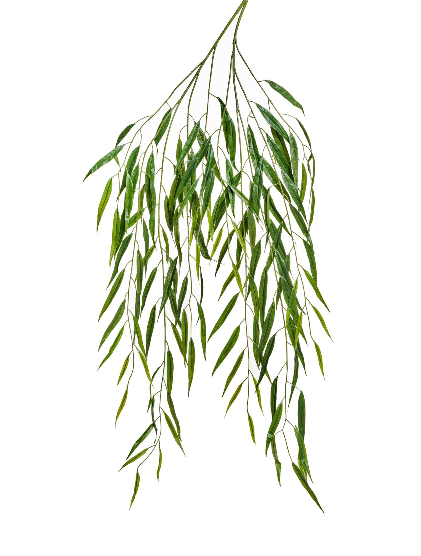 Картинка веточки ивы